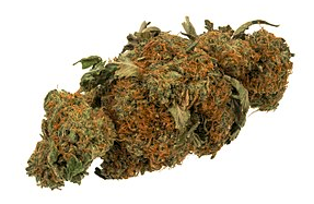 Physicians group: Medical pot campaign misleading voters