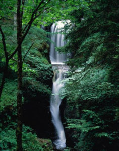 Waterfall in Forest --- Image by © Ronald Weir/zefa/Corbis