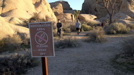 Despite damage, Joshua Tree National Park stays open and will increase access during government shutdown