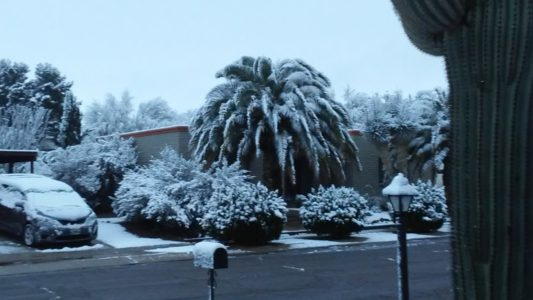 Snow on saguaros: Desert cities in US Southwest see freeze