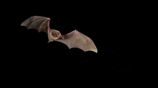 Health officials warn of possible rabies exposure from bat at NBA game